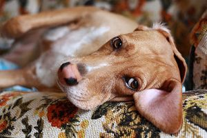pet health guide